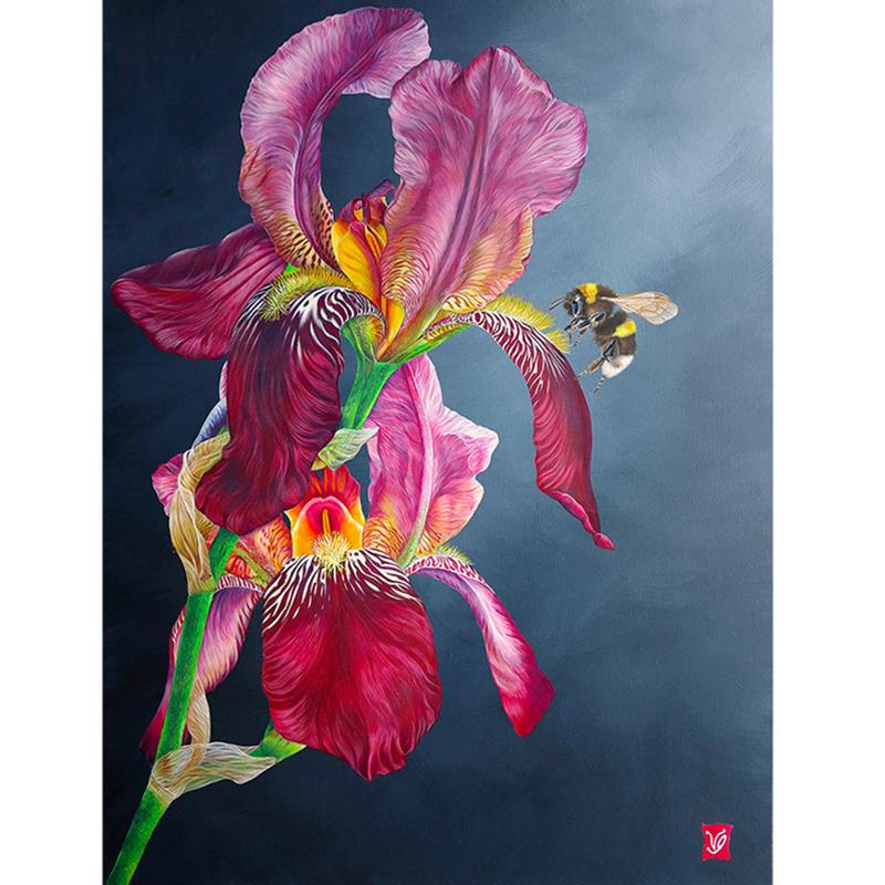 L'iris au bourdon